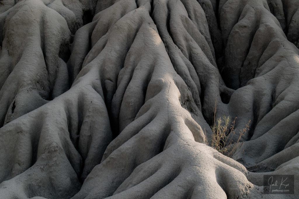 Erosion around a Plant