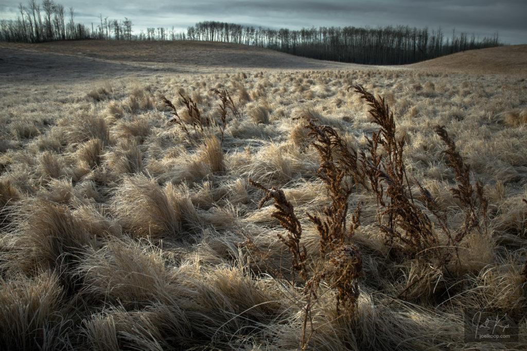 Dry Grass in Dead Fields