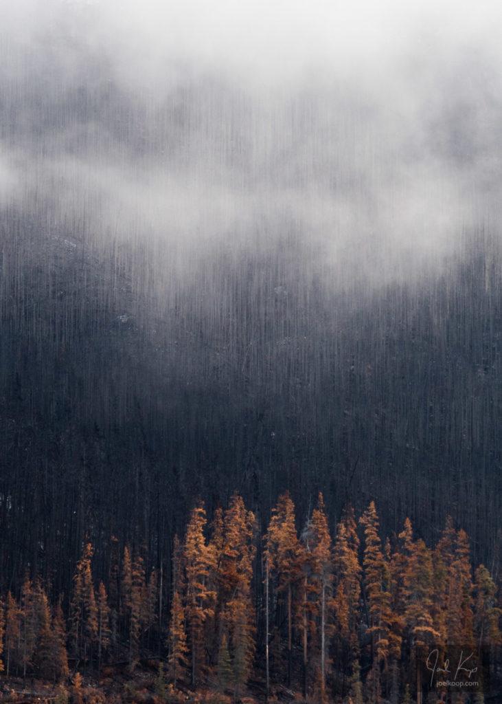 Mist Following Fire