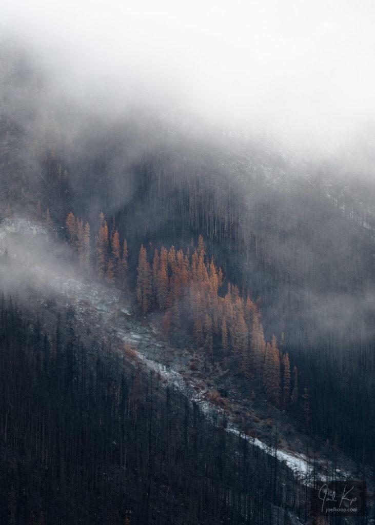 Burned Slope