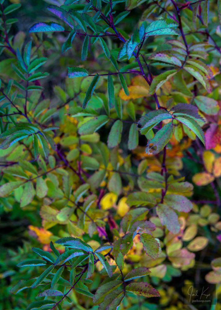 Rose Leaf Palette