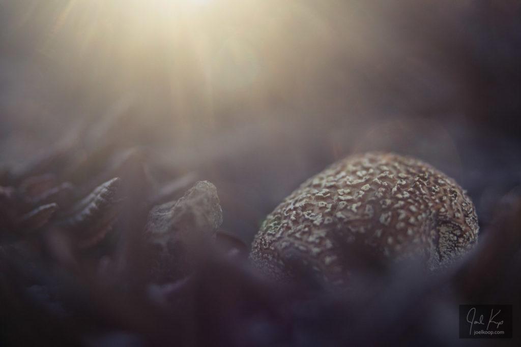 Fungi Dreaming