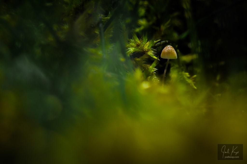 Hidden in Moss