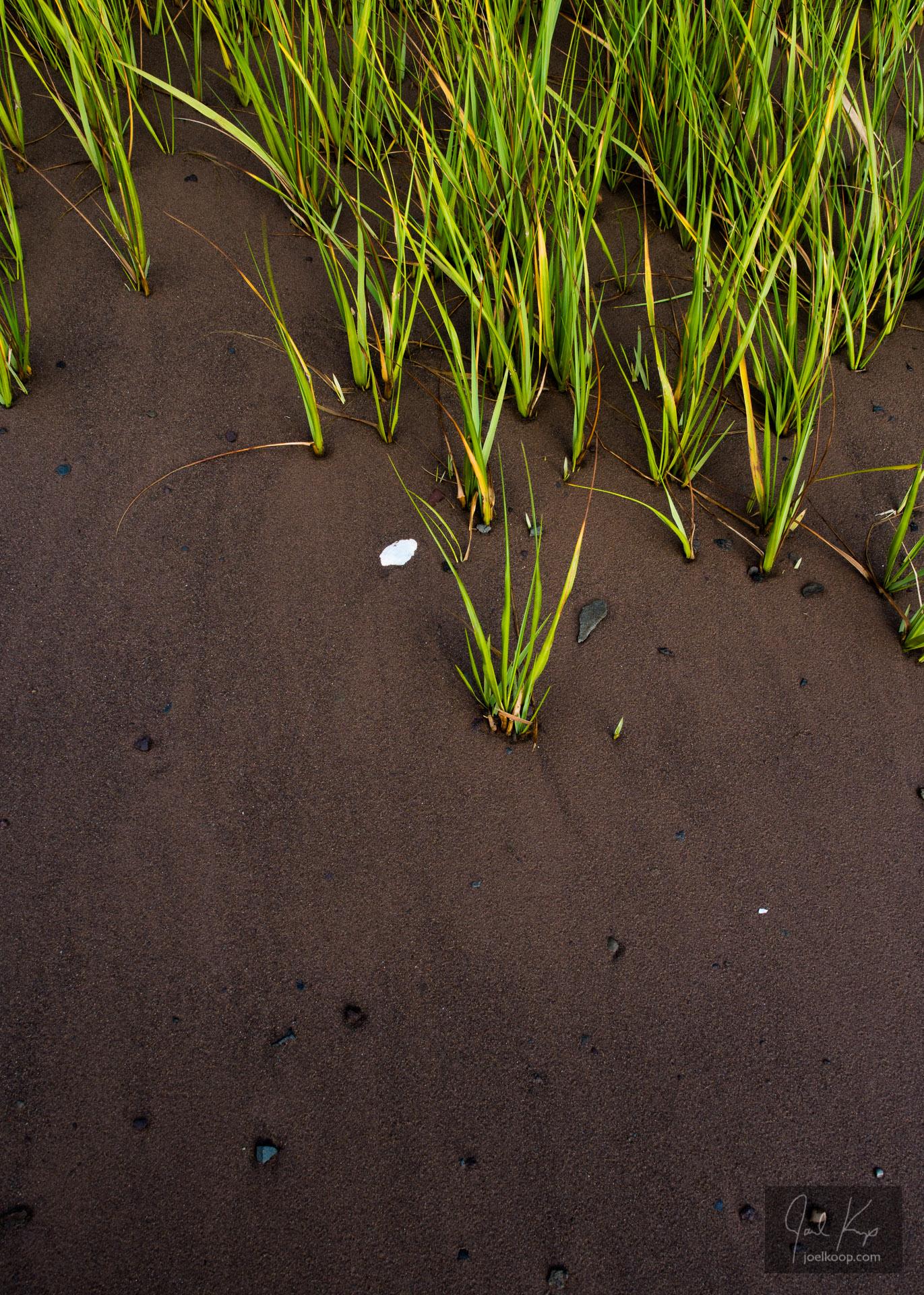 Growing Through Shifting Sand