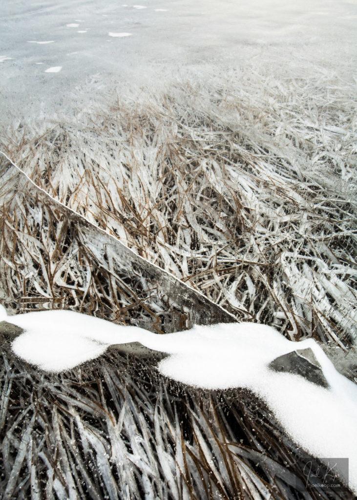 Ice-Captured Grass