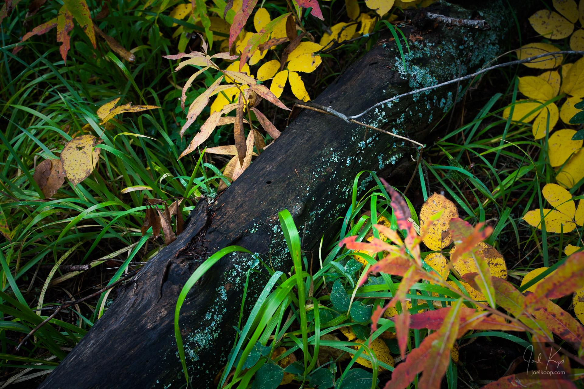 Richness of a Fall Rain