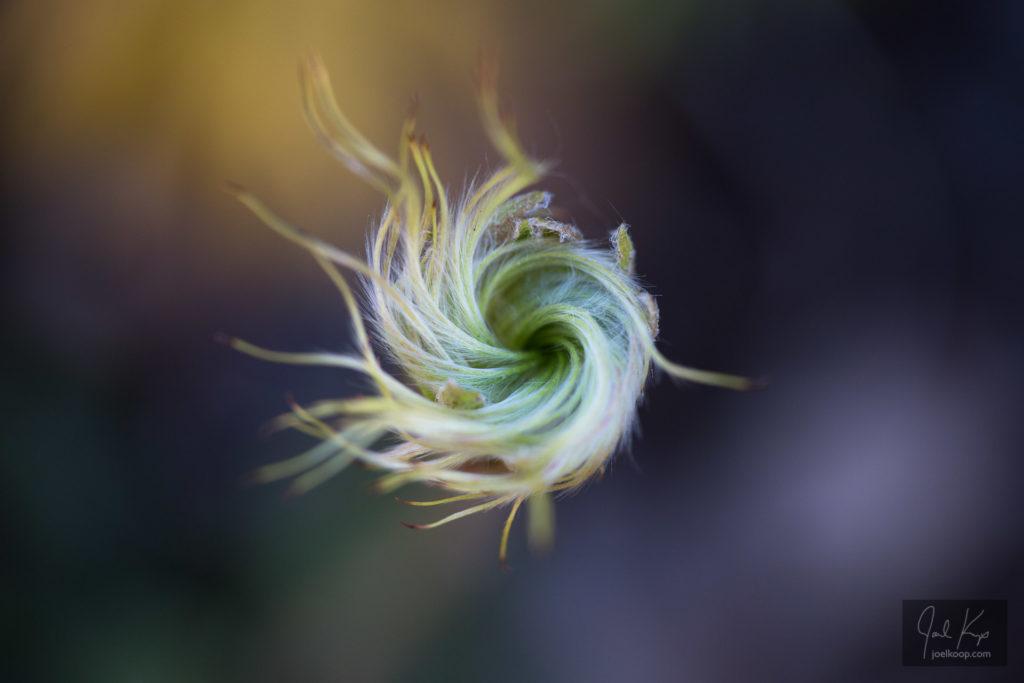 Spiral Seeds