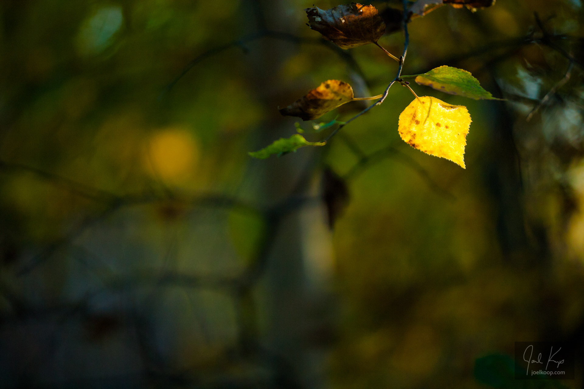 Leaf Spotlight