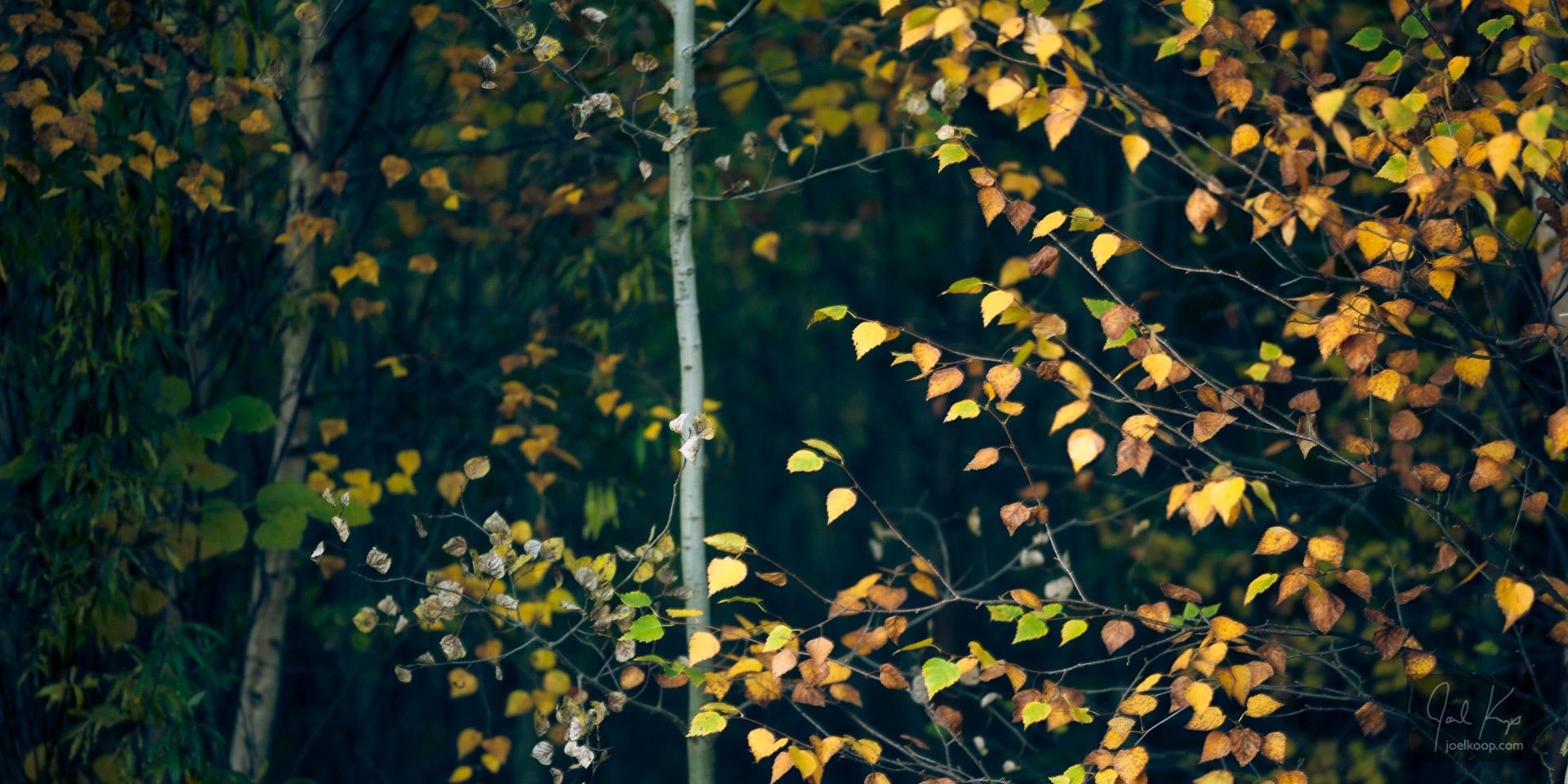 Autumn Variety Show